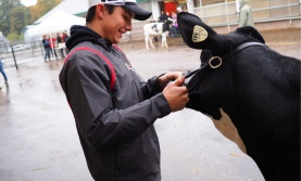Student with cow at College Royal