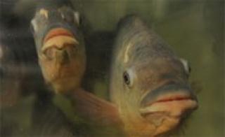 mapfishbutton