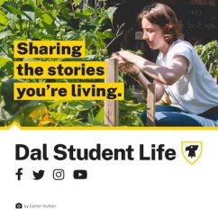 Graphic for the Student Life Hub