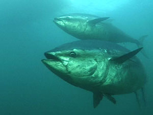 Diminishing biodiversity in our oceans