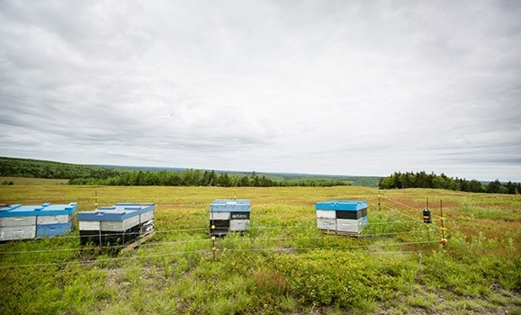 A photo of a field used for blueberry production in Nova Scotia.