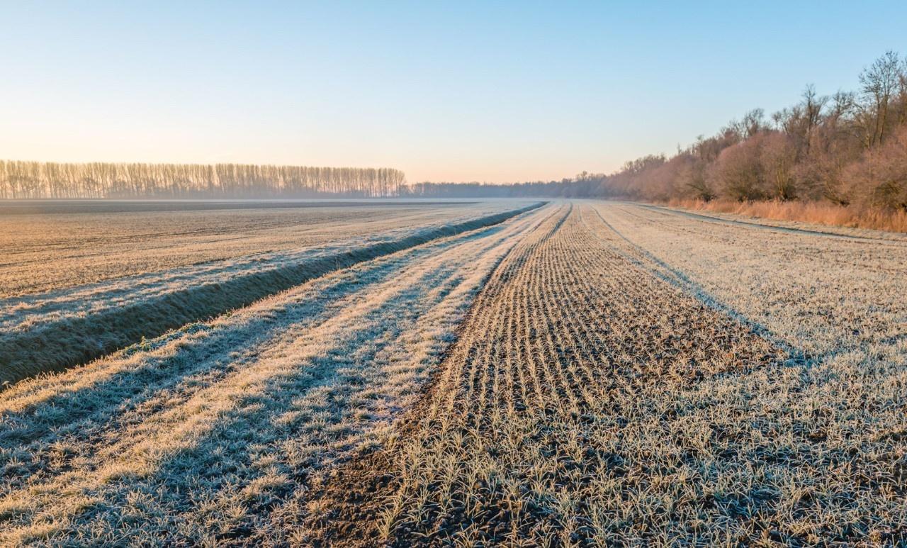 Grow your mind plant June 17