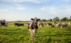 Several alumni named as Canada's Top 25 Dairy Herds