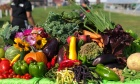The Cultiv8 Farm Stand