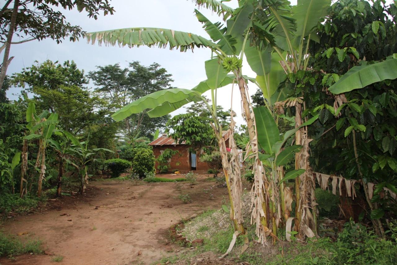 Uganda-Farm