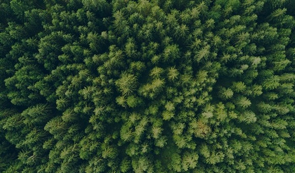 An aerial view of trees.