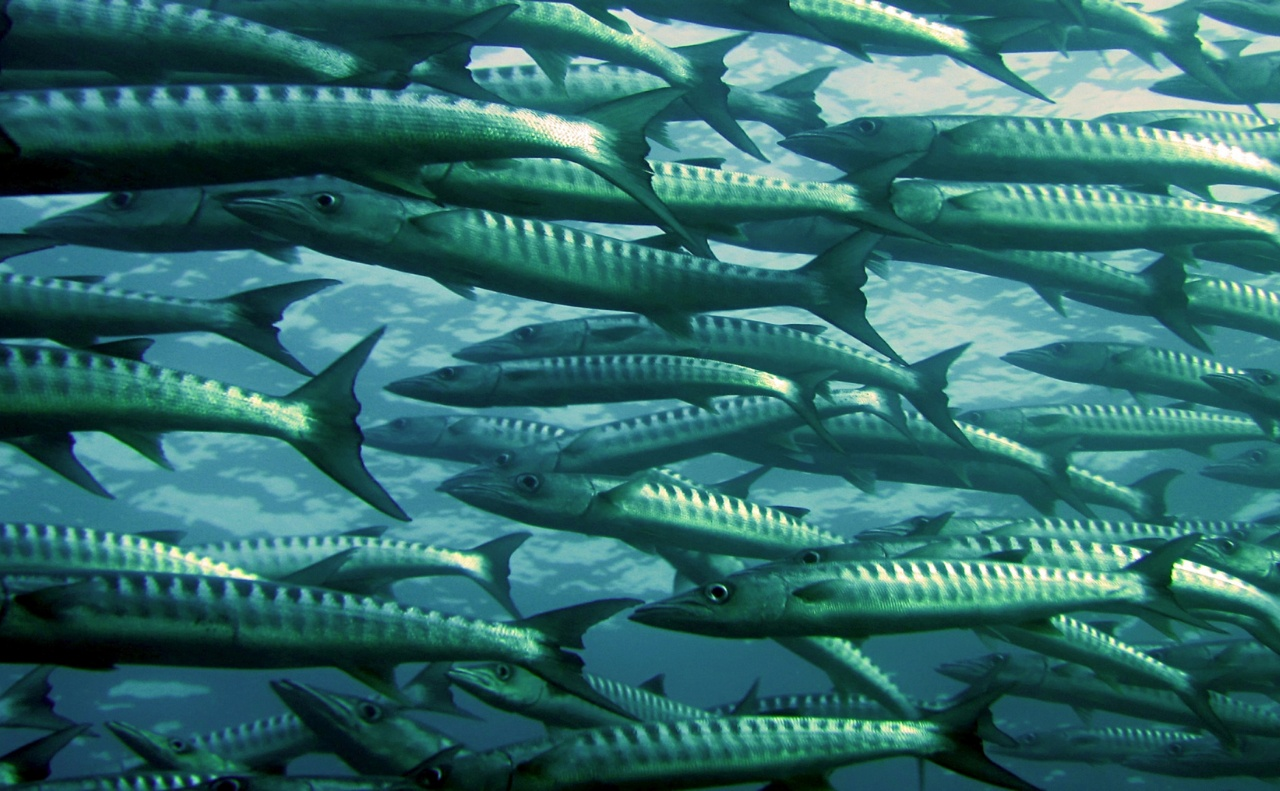 Ocean Analytics