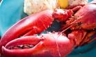 Annual Calgary Lobster Dinner