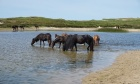 Dalhousie Engineering Professor working to protect Sable Island's ecosystem
