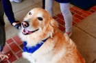 Therapy dogs to help people with needle anxiety at COVID‑19 vaccine clinic