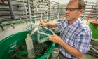 Dalhousie researchers help NS company launch eel aquaculture business
