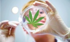 OPINION Marijuana: Judgement can preclude an honest dialogue in healthcare
