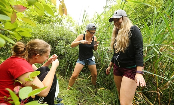 Gotta log 'em all: Dal hosts its first BioBlitz