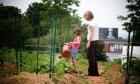 Growing a garden for everyone