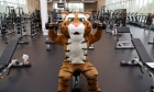 Fit and ready: New $23‑million Dalplex fitness centre opens