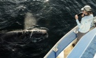 Armed with data: Unprecedented experiment with Canadian military provides new insights on right whales
