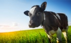 The Conversation: In defence of Canada's dairy farmers
