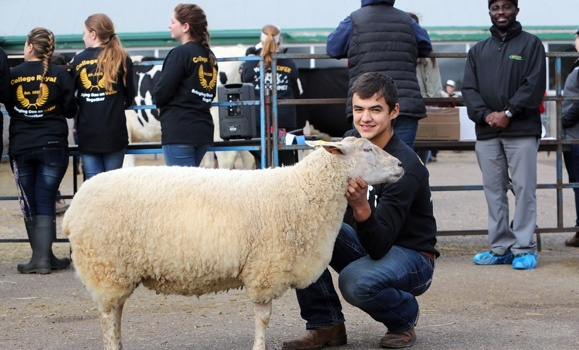 Show time: College Royal, an annual tradition at Dal AC