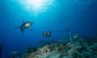 """Not on camera: Global study led by Dal researcher finds reef sharks """"functionally extinct"""" in some parts of the world"""