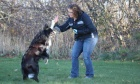 'Paws'‑itive animal training: Online extended learning course offers taming tips for animal owners