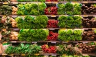 Canadian food prices set for steep climb in 2021, report predicts