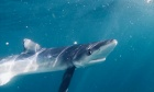 Shark Week offers a chance to learn more about what lies beneath