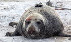Lost and found: The story of a missing grey seal camera