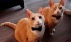 Pets of Dalhousie: Meet Bristow and Mylo