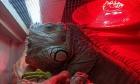 Pets of Dalhousie: Meet Uke