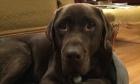 Pets of Dalhousie: Meet Toby