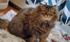 Pets of Dalhousie: Meet Aymei