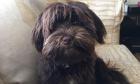Pets of Dalhousie: Meet Bailey