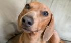 Pets of Dalhousie: Meet Suzy