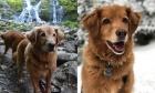 Pets of Dalhousie: Meet Fionn and Bran