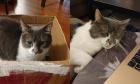 Pets of Dalhousie: Meet Dodger