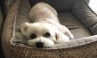 Pets of Dalhousie: Meet Soca