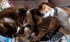 Pets of Dalhousie: Meet Jojo, Jerry Berry and Dexter
