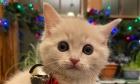 Pets of Dalhousie: Meet Noëlle