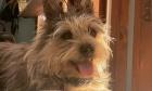 Pets of Dalhousie: Meet Stanley
