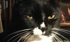 Pets of Dalhousie: Meet Sylvester