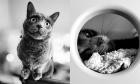 Pets of Dalhousie: Meet Cosmo