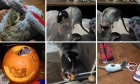 Pets of Dalhosuie: Meet Templeton, Pixie, Candy and Scara