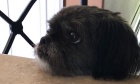 Pets of Dalhousie: Meet Molly