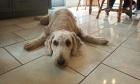 Pets of Dalhousie: Meet Snoopy