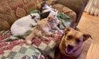 Pets of Dalhousie: Meet Keeper, Marlowe, Luka and Bonita