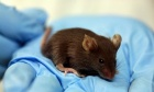 COVID‑19 Animal Research Reveals Ethical Shortcomings