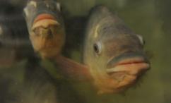 fish-slider2
